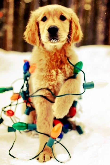 Go hang the lights, pup.
