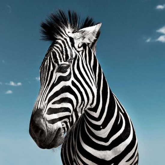 Animal Personality Profiles - Photographer David Boni Captures Animals Up Close and Personal (GALLERY)