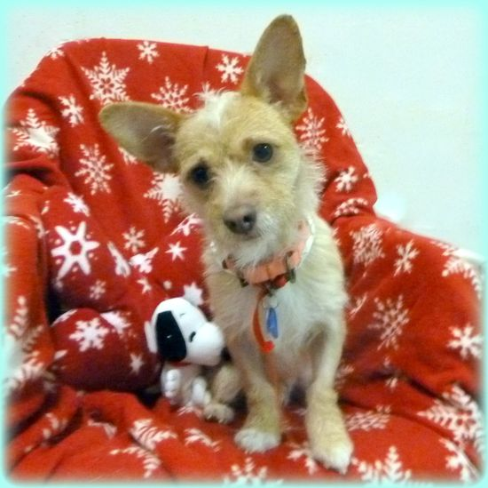 DOB: 11/03/11Neutered MaleBreed: Fox Terrier mixWeight: 9.6 lbs.Hello, my name is Barkley.  I came to this shelter as a transfer from another shelter because of overcrowding.  I am looking forward to finding a furever home where I can live happily...