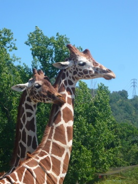 San Diego Zoo Safari Park.... been there! :)