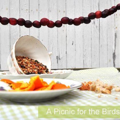 Feeding Backyard Birds