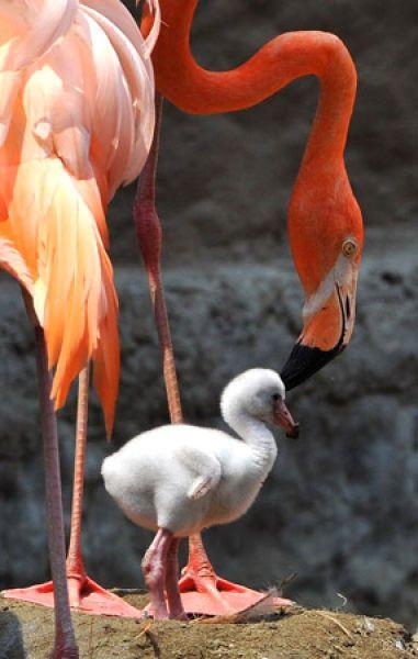 Damn Fresh Pics: Amazing Pictures Of Sweet Baby Animals  damnfreshpics.blo...