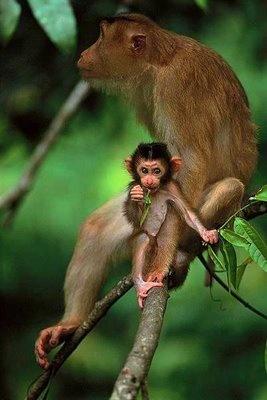 wild animal photographs
