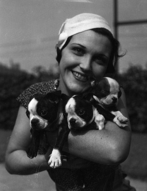 1920's boston terrier puppies.