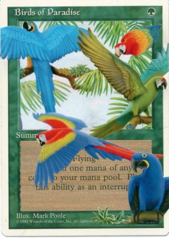 Altered Art Birds of Paradise
