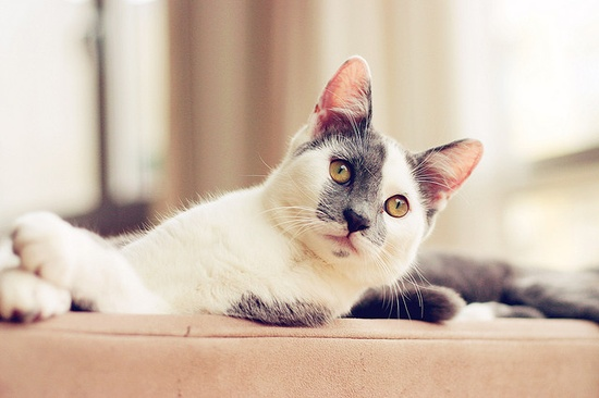 What splendidly lovely markings you have, darling kitty! #cat #kitty #kitten #cute #pets #animals #white #grey