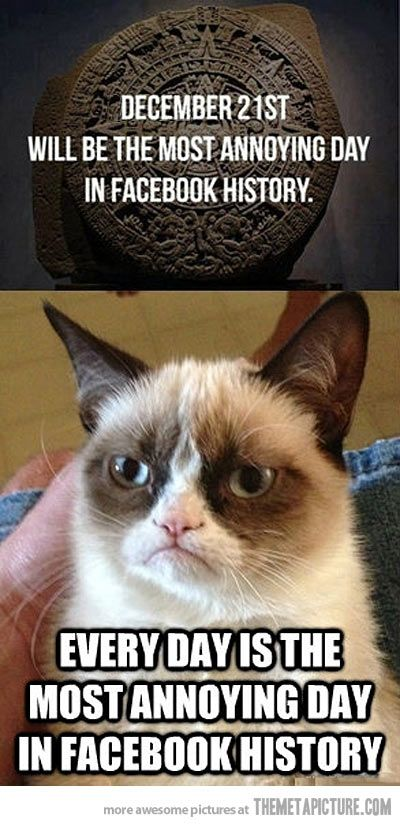 I agree with you Grumpy Cat!