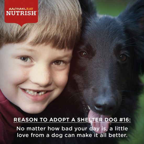 Why do you adopt a shelter dog?~Did I rescue Cheese?No,he rescued me. :-) ?