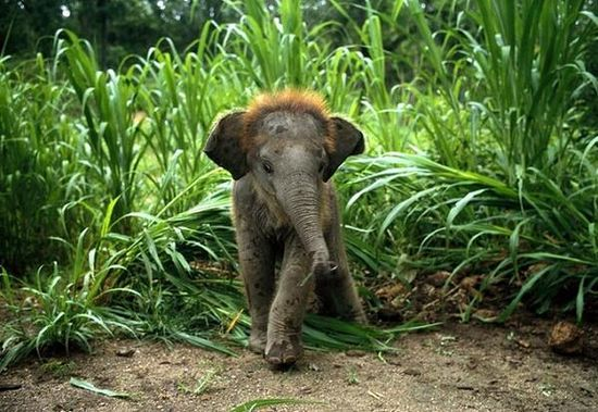Trust cute baby elephant on Twitter