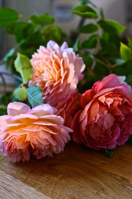 Tea Caddy Roses