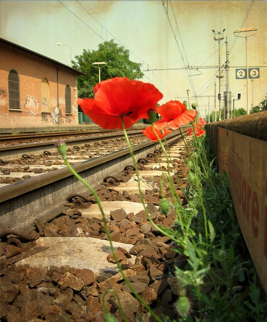 Flower Railway Station - beauty can be found everywhere if you look