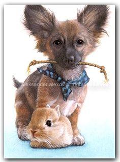 such cute pet portraits!!!!