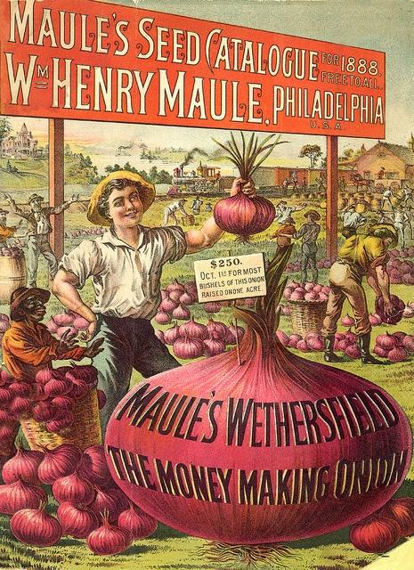 Maule 1888