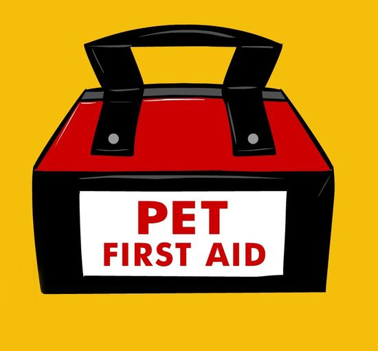 building your very own pet first aid kit