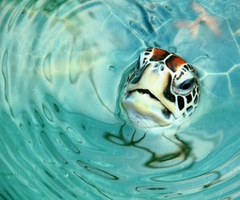 The perfect shot. i LOVE turtles!!!!!!!!!!!!;)