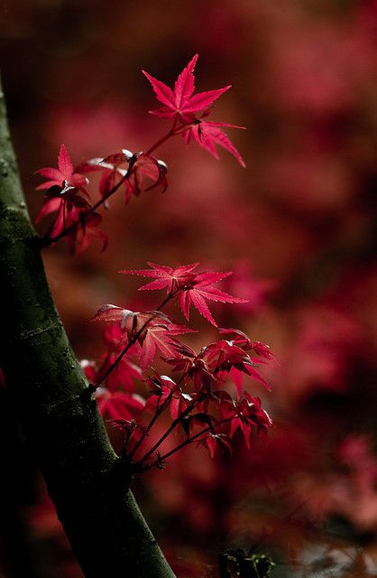 Deep Red in November