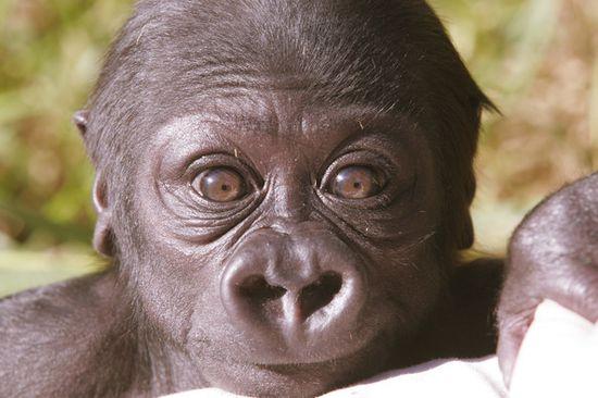 Baby Animal Photographs