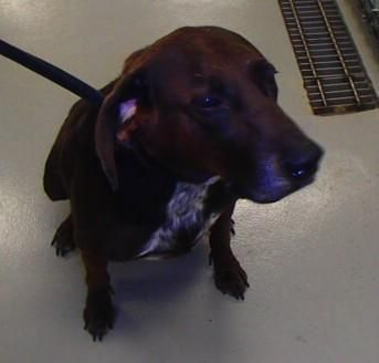 Scooby is around 8 yrs old. He is a stray from Medina St/ Foote Rd. He is a sweet dog that acts like he is young again. Scooby is available today come down and check him out www.petfinder.com... Medina County Animal Shelter 6334 Deerview Lane, Medina, OH 44256 330-725-9121
