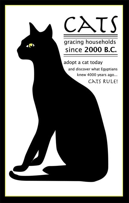 Adopt a cat to grace your household! #adopt, #cats #animal rescue
