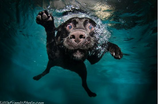 Phodography--Hilarious and cute photos of dogs!