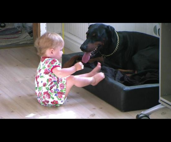 Funny video with animals and children