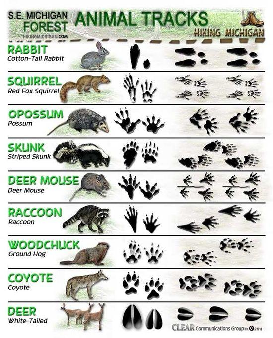 How to determine animal tracks
