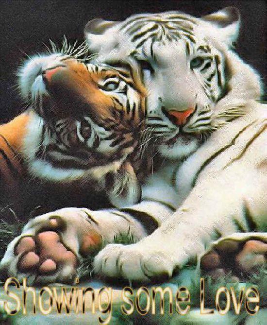 Animal Photo National Geographic
