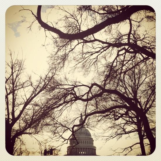 Washington DC (1)