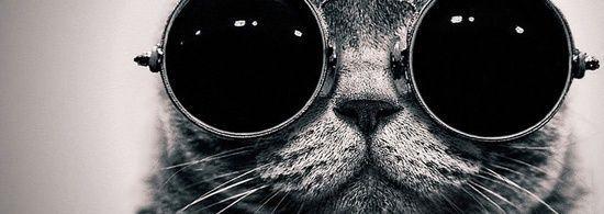 Funny cat #1
