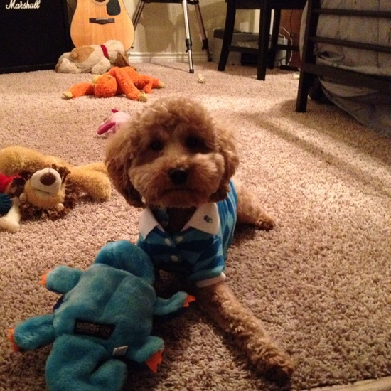Cute baby in his polo with all his toys!