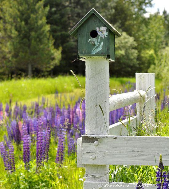 & birdhouses!