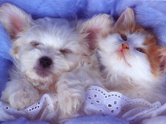 Descansando con mi amigo!!!