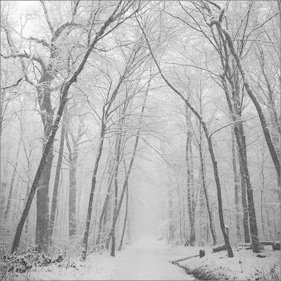 snow.-