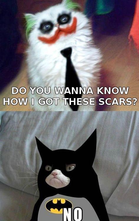 Grumpy BatCat