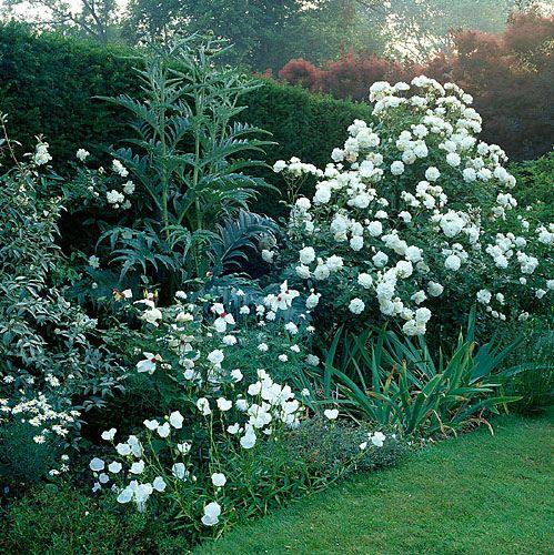 Iceberg roses and white campanula