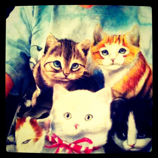 My baby Cats --Taylor Swift