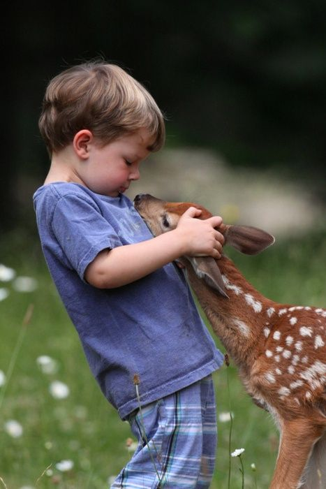 Baby deer saying 'hello' to a young boy