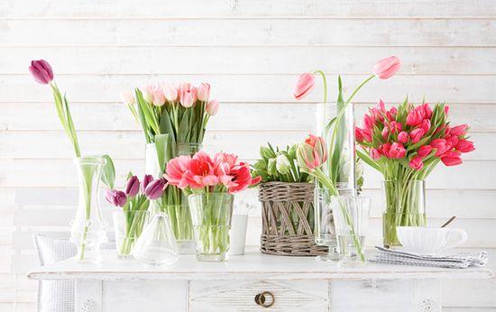 tulips, tulips, tulips...
