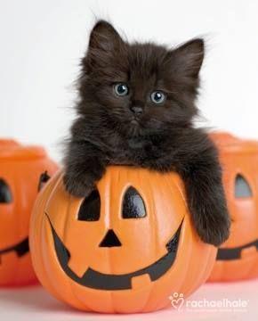 How cute! #cat #blackcat #halloweencat
