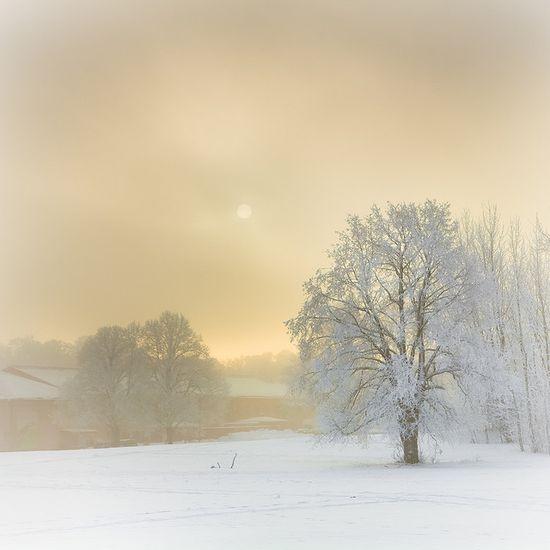 Winter, Gärdet    :   Stockholm, Sweden.   by Hannes R
