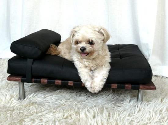 Modern pet day bed and lounger, $135