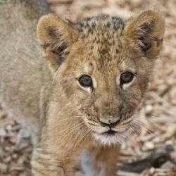 baby wild animals