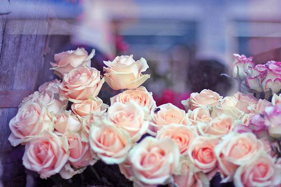 Belgium - pink roses!