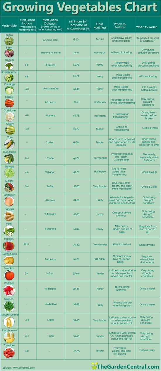 When to plant vegetables. #Gardens