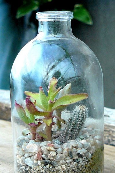 more succulent garden ideas