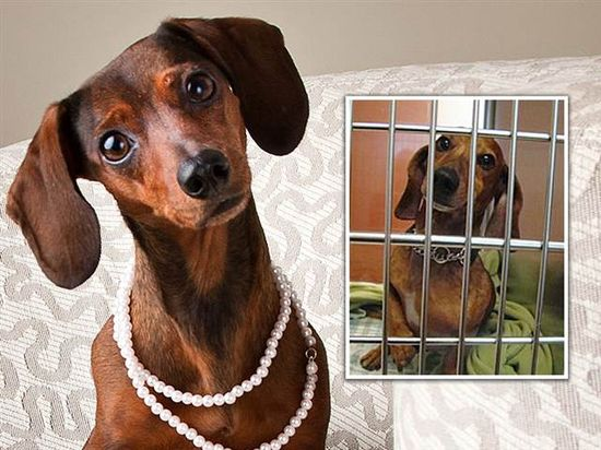 To snag homes, shelter pets get glam makeovers - TODAY Pets & Animals - TODAY.com.