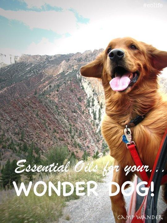 Essential Oils for your WONDER DOG! List & Remedies