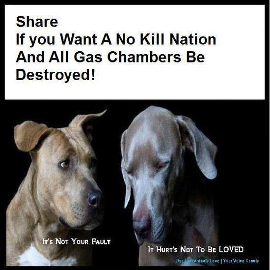 #animals #rescues