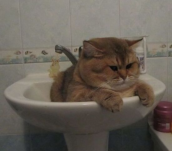 Garfield getting ready for a bath, LOL ---> Watch funny animal videos and pictures at www.yourpetclip.c...