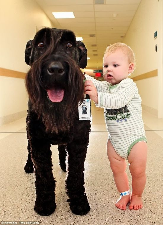 Baby & dog...